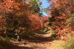 Scrub-oak-over-the-trail