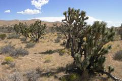 landscape058DSC_4260